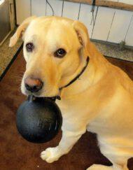 Koiran lelut ja tarvikkeet